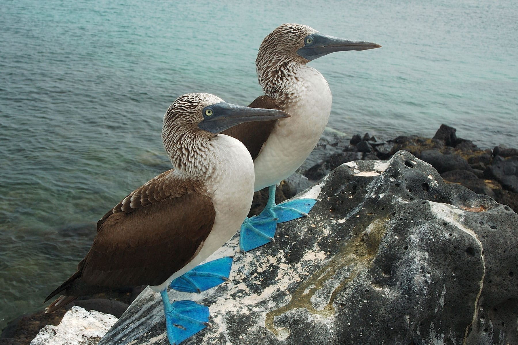 Combining the Galapagos Islands with Machu Picchu: When is the best time to go?