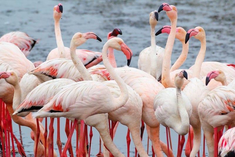 Namibia - Swakopmund - flamingoes