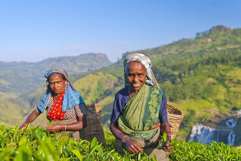 Sri Lanka - tea-pickers