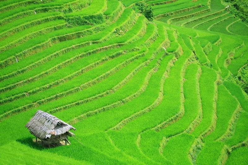 Vietnam - Rice field terraces