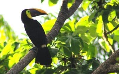 Canopy capers in Costa Rica