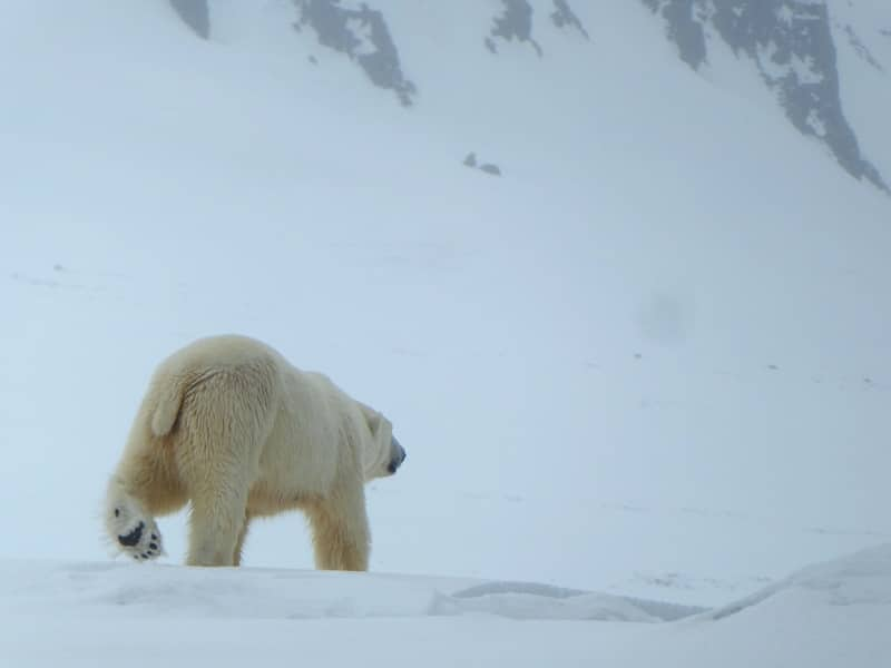 Spitsbergen: wildlife & wilderness