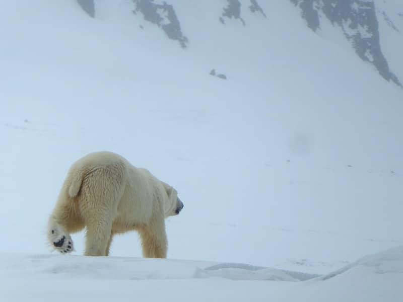 Spitsbergen: wildlife & wilderness